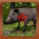 Boar Hunter 2015: Wild Pig Hunt